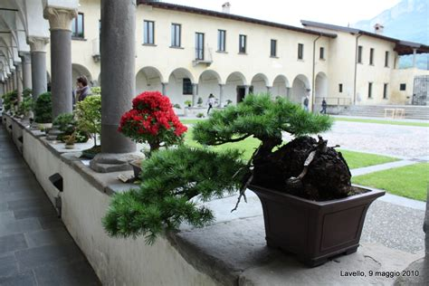 monastero lavello circolo bonsai lecco