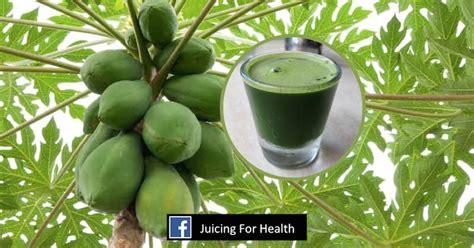 Papaya leaf juice: How to drink papaya leaf juice to ...
