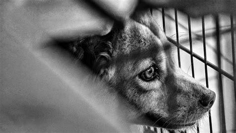 fbi  finally track animal abuse  collect data