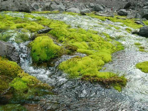 moos steinen entfernen unkraut zwischen steinen dauerhaft entfernen unkraut zwischen steinen vernichten unkraut aus