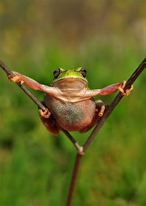 10 Fun Photos Of Frogs With Personality