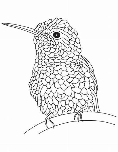 Hummingbird Coloring Pages Bird Hummingbirds Drawing Hard