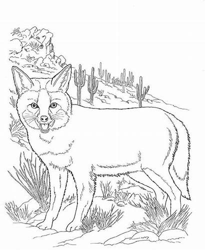 Coloring Desert Animals Pages Fox Animal Printable