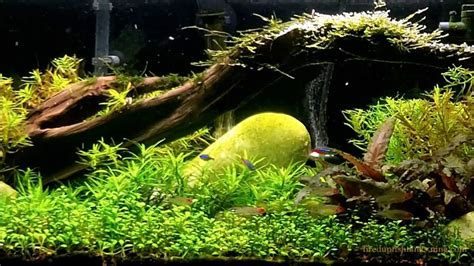 what substrate to use in a planted aquarium