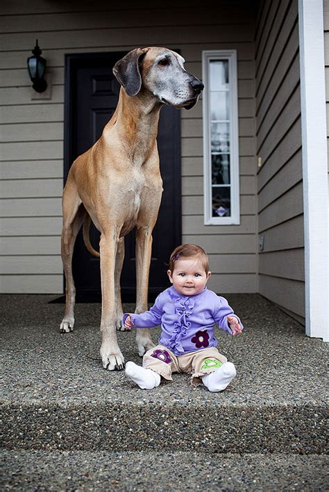 gigantic dogs  small kids  heart completely melted