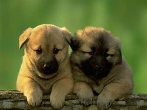Pic Famina: Download Cute Puppy Hd Wallpapers