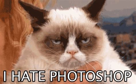 Unamused Cat Meme - sorry game of thrones gif find share on giphy