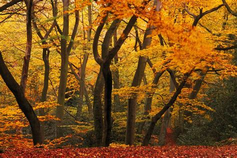 Temperate Forests Are Mild-Climate Forests