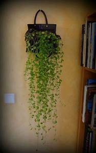 Suspension Pour Plante : plante tombante fashion designs ~ Premium-room.com Idées de Décoration