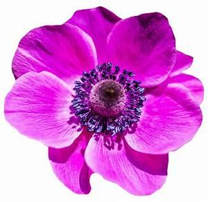 Flower PNG Transparent Image - PngPix
