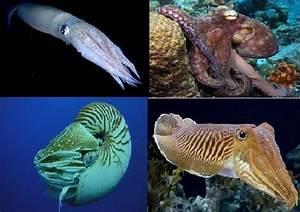 Moluscos: características generales del tipo Ciencia y biología