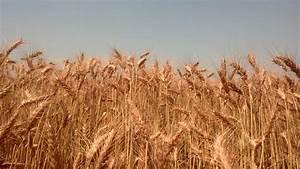Winter Wheat Crop 2013 | From Sand Creek