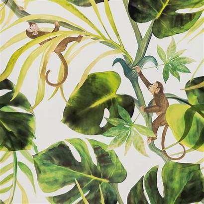 Monkey Clarke Business Wallpapers Colony Natural Tropical