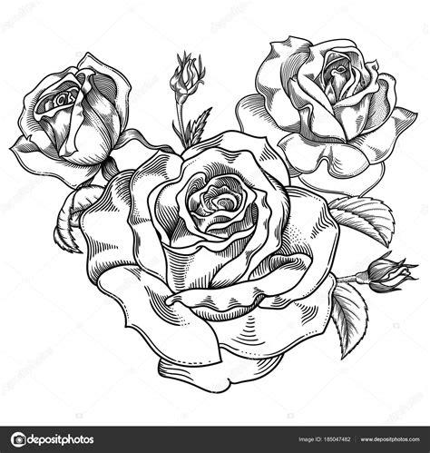 Floração preto e branco esboço rosas flores ilustração