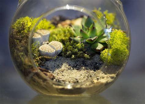 สวนสวยในโหลแก้ว (moss terrarium)