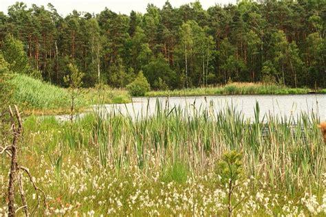 """Panoramio  Photo Of Użytek Ekologiczny """"bagno W Jeziorze"""""""