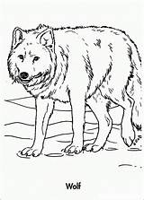 Wolf Coloring Pages Adults Wolves Sheets Printable Adult Colour Anime Realistic Bestcoloringpagesforkids Animal Colouring Mandala Loup Dessin Unique Pack Result sketch template