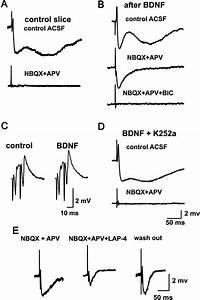Mossy Fiber Monosynaptic Gabaergic Transmission Can Be