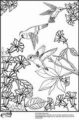 Coloring Hummingbird Birds Pages Bird Flowers Hummingbirds Printable Flower Humming Adult Sheets Realistic Really Wings Nature Colorings Colors sketch template