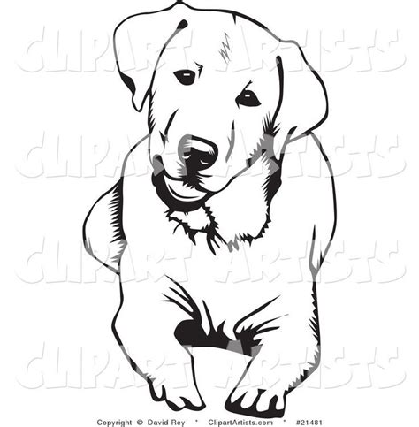 labrador retriever dog  coloring page  images