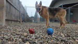 What will leo do just dogs playcare for Red dog daycare