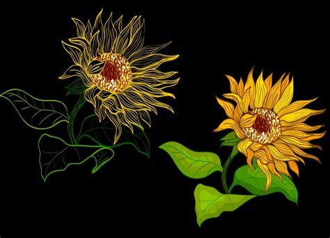 sunflower drawing  vector    vector
