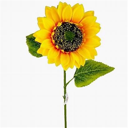 Artificial Giant Sunflower Sunflowers Single Flowers Edge