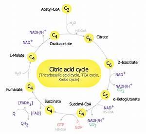 Biology Symbols