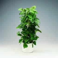 Plante Balcon Facile D Entretien : plante d 39 int rieur super d co et facile d 39 entretien la ~ Melissatoandfro.com Idées de Décoration