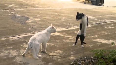 lol cats fail compilation youtube