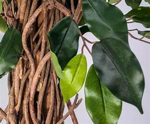 Ficus Benjamini Kaufen : ficus benjamini kunstbaum mit 210cm online kaufen ~ A.2002-acura-tl-radio.info Haus und Dekorationen
