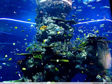 aquarium sea 10 must visits at the s e a aquarium a guide to the world the sea thesmartlocal