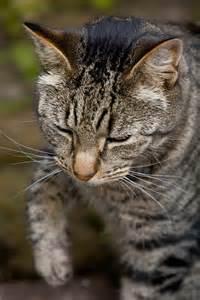 Most Beautiful Cat