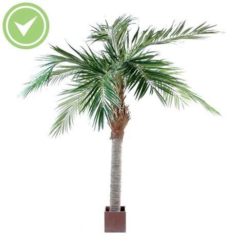 palmier exterieur prix