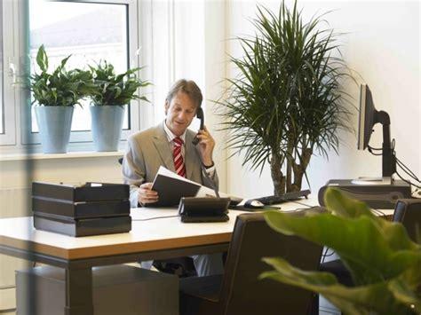 plante pour bureau aménagement de plantes d 39 intérieur pour le bureau de travail