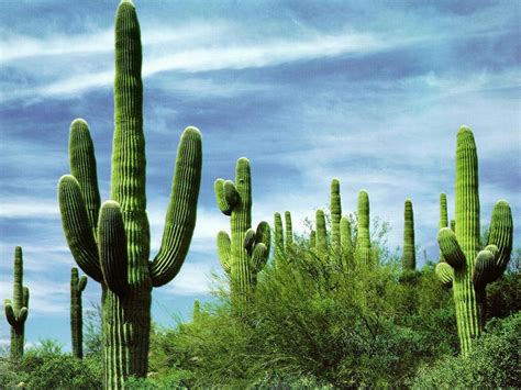 pics of cacti monitoring with cacti terraltech