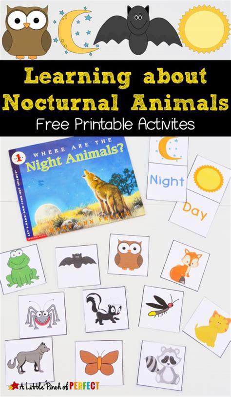 nocturnal animals printables bats nocturnal animals owl activities kindergarten science