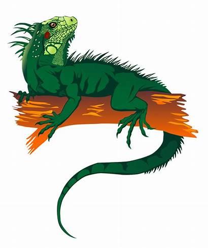 Iguana Clipart Clip Lizards Cartoon Animals Cliparts
