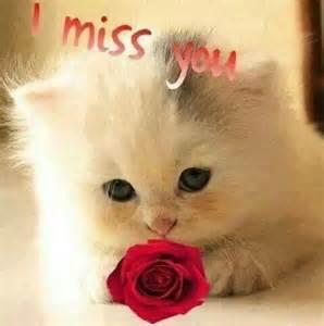 I Miss You Cute Animals
