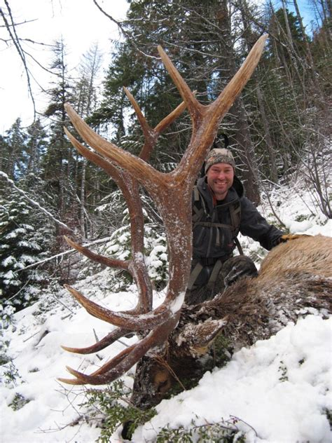 elk montana hunting rifle hunts trips clay bull outfitter outfitters deer hunt colosal huntwithcody bear lodge
