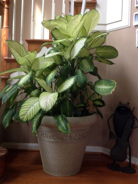 tropical house plants can you eat tropical houseplants