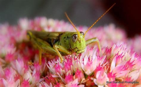 grasshopper on flowers jigsaw puzzle
