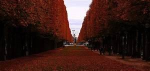 Paris En Automne  Pourquoi Visiter Paris  U00e0 Cette P U00e9riode