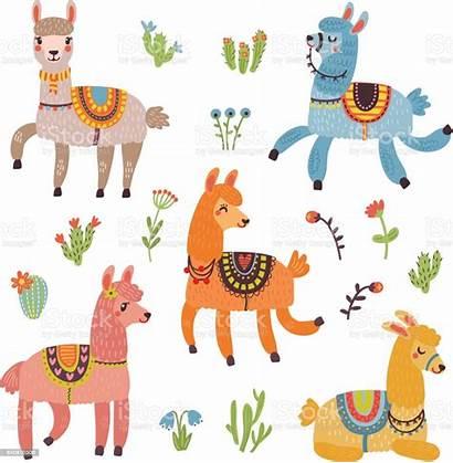 Lama Vector Llama Alpaca Illustration Characters Vectors
