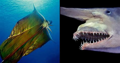 15 Sea Creatures That Have Left Scientists Completely Baffled