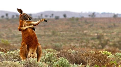 comedy wildlife photography entries reveal nature