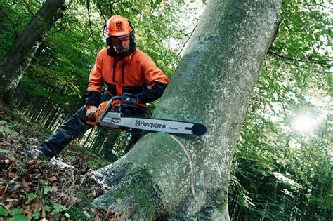 Free Chainsaw Training, tree surgery, tree care, tree