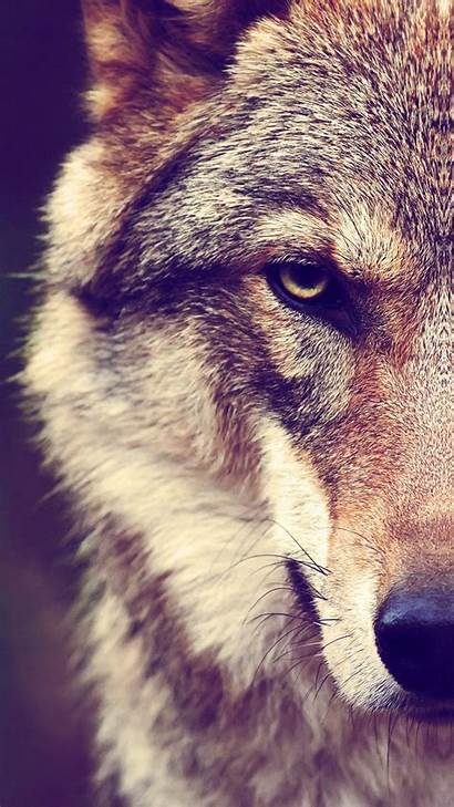 Wolf Hupages Iphone Wallpapers