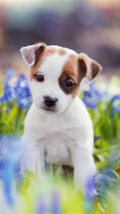 Puppy Iphone Wallpapers Dogs Doggy Xs Everpix