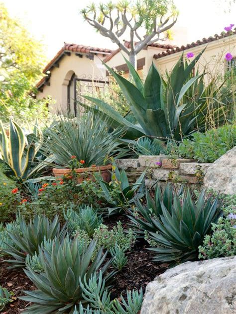landscaping succulents succulent landscape simply succulents pinterest